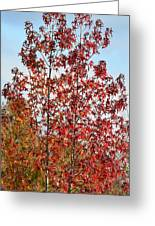 Sunlit Red In November 2012 Greeting Card
