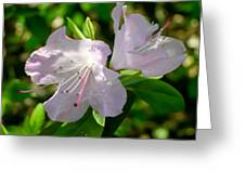 Sunlit Rhododendrons Greeting Card