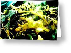 Sunlit Seaweed Greeting Card
