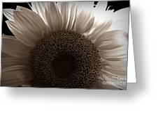 Sunlit Sepia Greeting Card