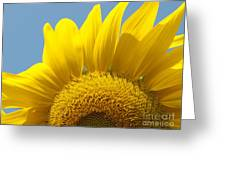 Sunlit Sunflower Greeting Card