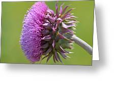 Sunlit Thistle Greeting Card