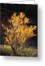 Sunlit Tree In Palo Duro Canyon 110213.06 Greeting Card
