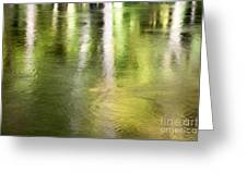 Sunlit Tree Reflections Greeting Card