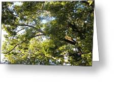 Sunlit Tree Tops Greeting Card