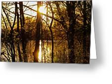 Sunlit Trees  Greeting Card
