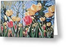 Sunlit Tulips Greeting Card by Andrei Attila Mezei