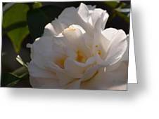 Sunlit White Camelia 2013 Greeting Card