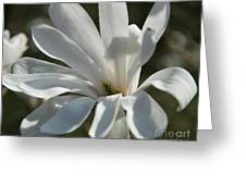 Sunlit White Magnolia Greeting Card