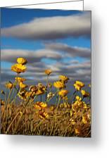 Sunlit Yellow Wildflowers Greeting Card