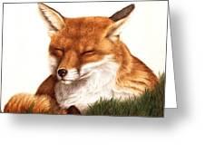 Sunnin' Red Fox Greeting Card