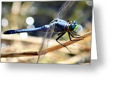 Sunning Blue Dragonfly Square Greeting Card