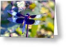 Sunning Dragonfly Greeting Card