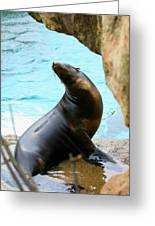 Sunning Sea Lion Greeting Card