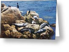 Sunning Seals Greeting Card