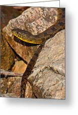 Sunning Snake Greeting Card