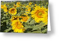 Sunning With Friends Greeting Card