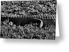 Sunny Alligator Black And White Greeting Card