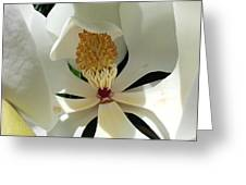 Sunny And Shy Magnolia Greeting Card