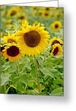 Sunny As Far As The Eye Can See Greeting Card