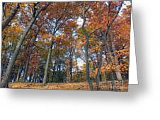 Sunny Autumn Day 3 Greeting Card