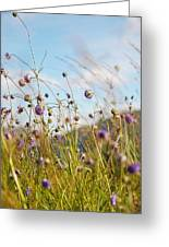 Sunny Bliss. Rest And Be Thankful. Scotland Greeting Card