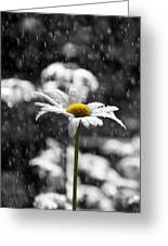 Sunny Disposition Despite Showers Greeting Card