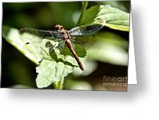 Sunny Dragonfly Greeting Card