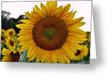 Sunny Face Greeting Card