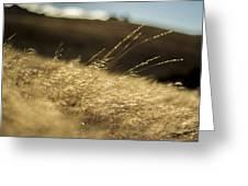 Sunny Grain Greeting Card