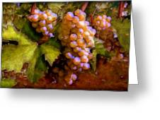 Sunny Grapes - Edition 1 Greeting Card
