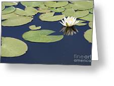 Sunny Lily Pond Greeting Card