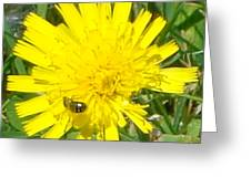 Sunny Lunch Greeting Card