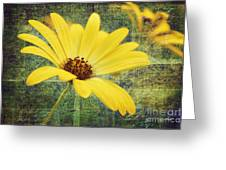 Sunny Moment Greeting Card