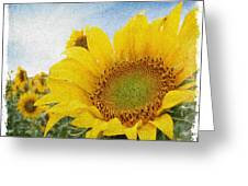 Sunny Morning Greeting Card