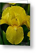 Sunny Rain Greeting Card
