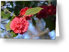 Sunny Red Camelias Greeting Card