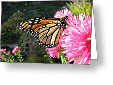 Sunny Side Monarch Greeting Card