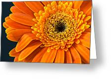 Sunny Side Up Greeting Card