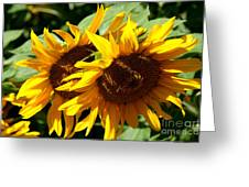 Sunny Sisters Greeting Card