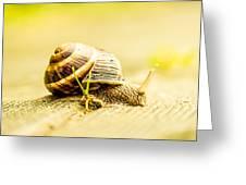 Sunny Snail Greeting Card