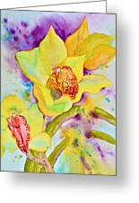 Sunny Splash Of Orchids Greeting Card