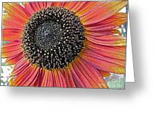 Sunny Summer Sunflower Greeting Card