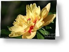 Sunny Summer Greeting Card