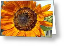 Sunny Sunflower Greeting Card by Annette Allman
