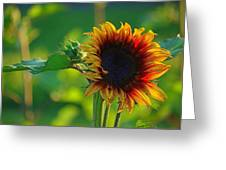 Sunny Sunflower Greeting Card by Denise Darby