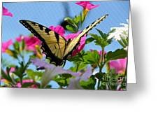 Sunny Tiger Swallowtail  Greeting Card
