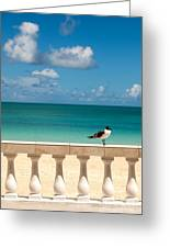 Sunny Tropical Seashore With Gull Greeting Card
