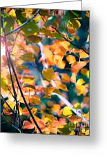 Sunny Yellow Leaves Greeting Card