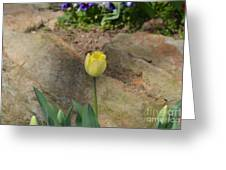 Sunny Yellow Tulips Series  Picture B Greeting Card